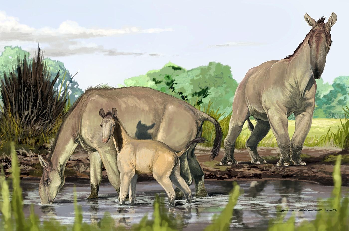 слушатели получали картинки с древними животными район отлично подходит